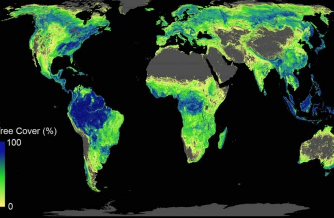 For First Time Ever, Scientists Identify How Many Trees to Plant and Where to Plant Them to Stop Climate Crisis